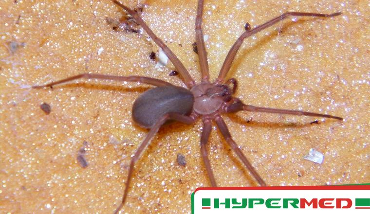 A Oxigenoterapia Hiperbárica No Tratamento De Picadas De Aranha