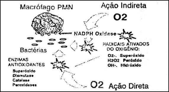 Efeitos da oxigenoterapia hiperbárica na resposta imunológica
