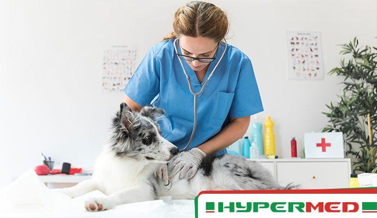 Oxigenoterapia hiperbárica na recuperação de Fasceíte Necrotizante de animais também